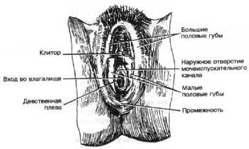 vlagalishe-iz-chego-sostoit